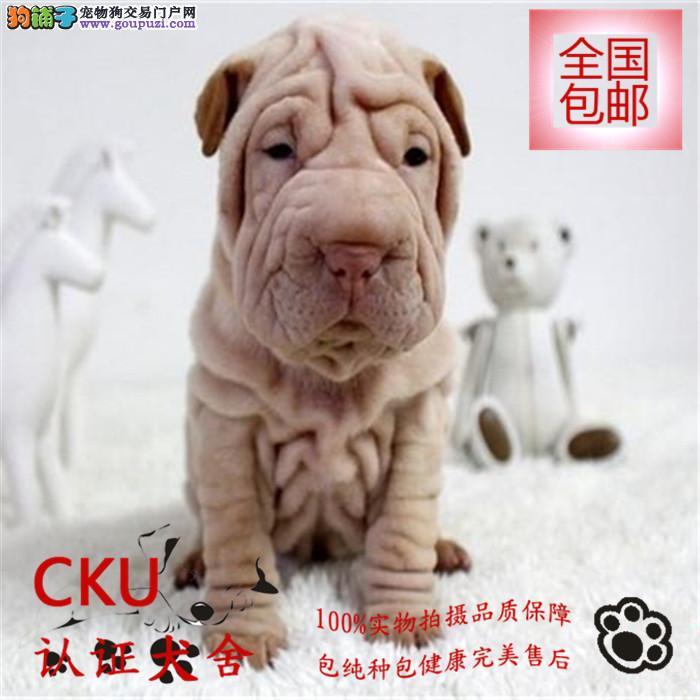 基地直销高品质沙皮狗幼犬 签健康协议 包养活 送用品