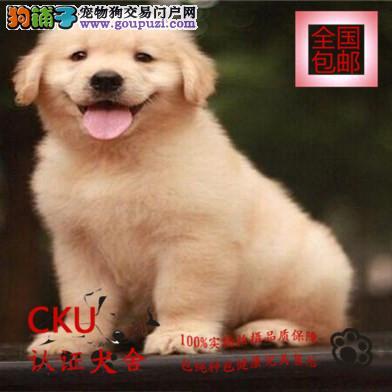 基地直销金毛幼犬 签协议包养活买狗送用品可视频挑选