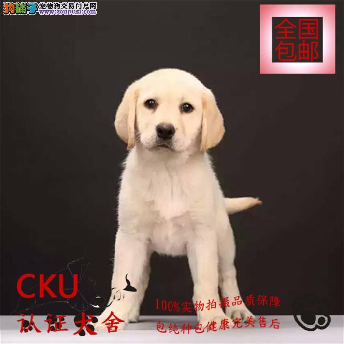 拉布拉多幼犬出售/签协议包健康买狗送用品狗粮