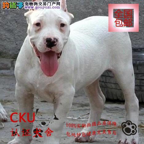 犬舍热卖杜高幼犬 公母均有 已训练 服从性高终身售后