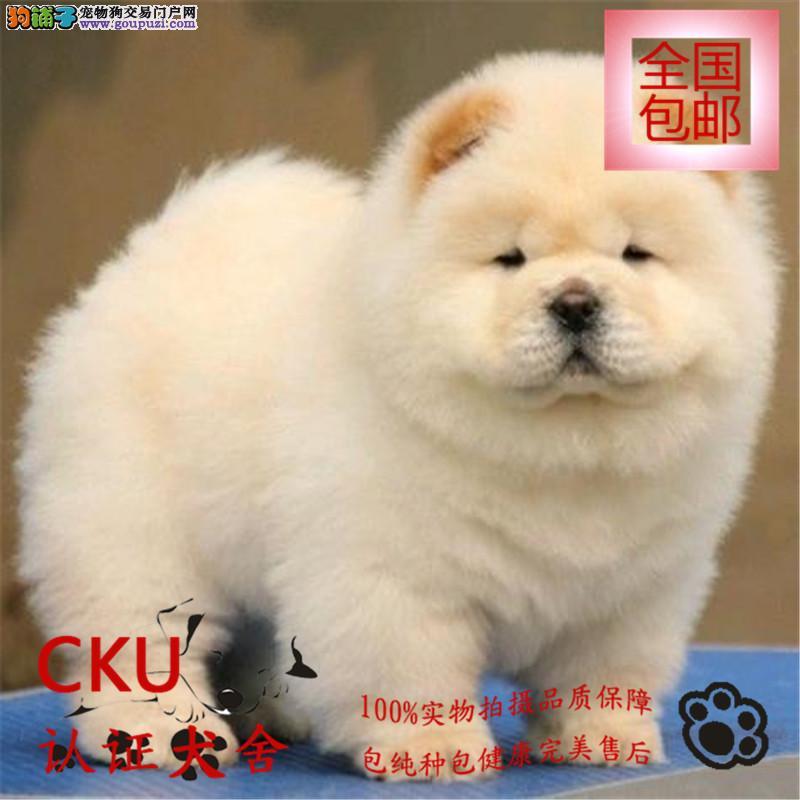 极品松狮幼犬出售 颜色齐全 签质保协议 终身售后