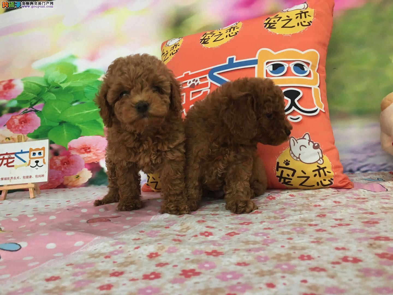 中国唯一宠物品牌连锁,西城宠之恋品牌连锁店