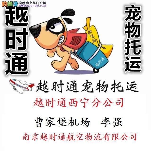 西宁宠物托运只找西宁宠物托运专家李强