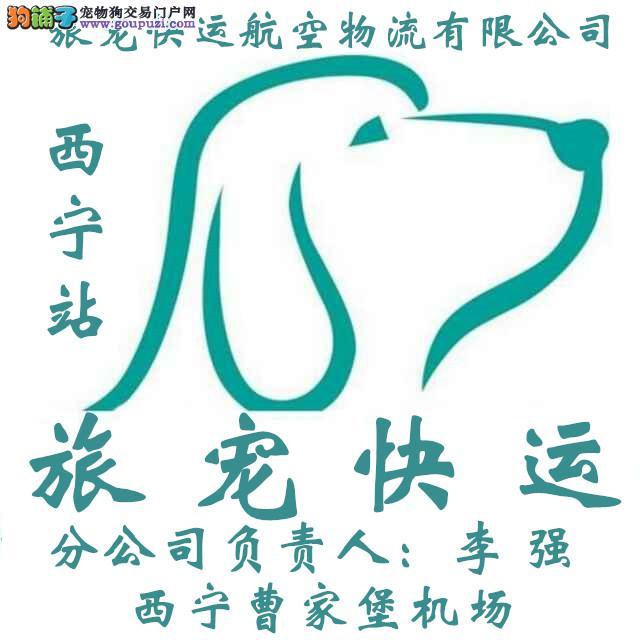 西宁宠物托运全国找西宁旅宠宠物快运李强