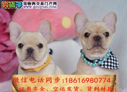 买纯种法斗幼犬 视频看狗 送狗上门 可签协议