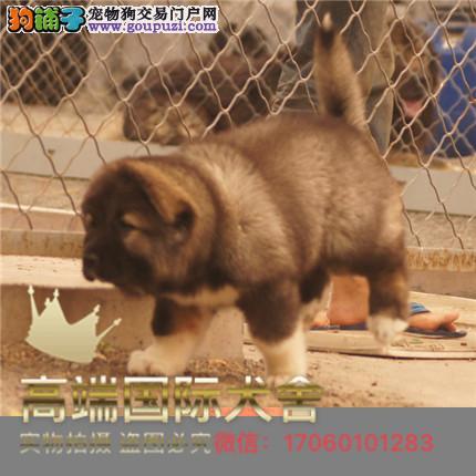 长期繁殖高加索犬, 各类纯种名犬 包养活签协议