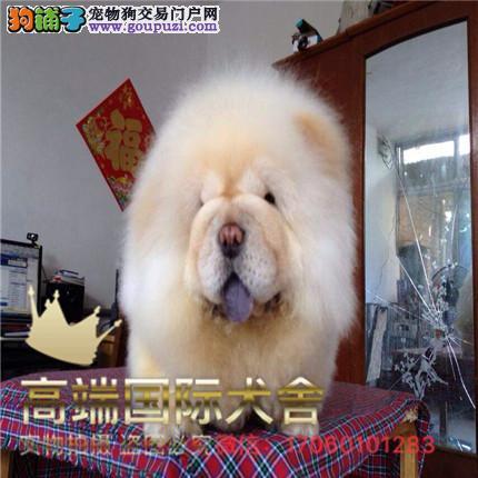 长期繁殖松狮犬, 各类纯种名犬 包养活签协议