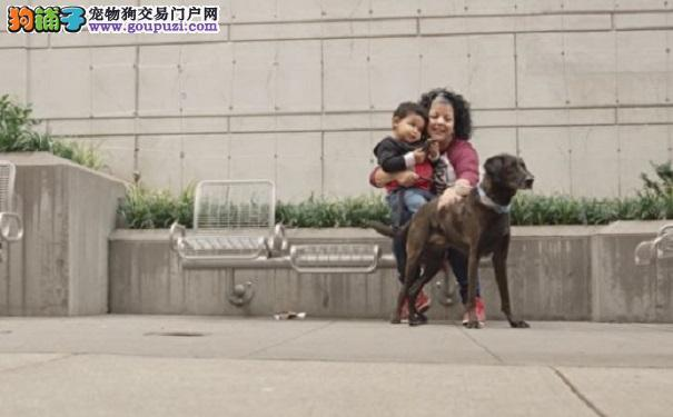 狗狗趴在女主人肚子上 没想到三个星期后奇迹出现8