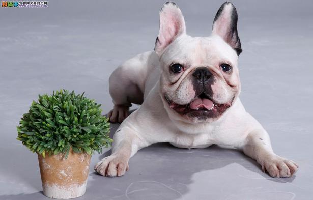 两个有关于狗狗的趣事6