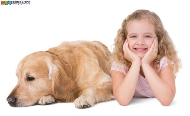 两个有关于狗狗的趣事5