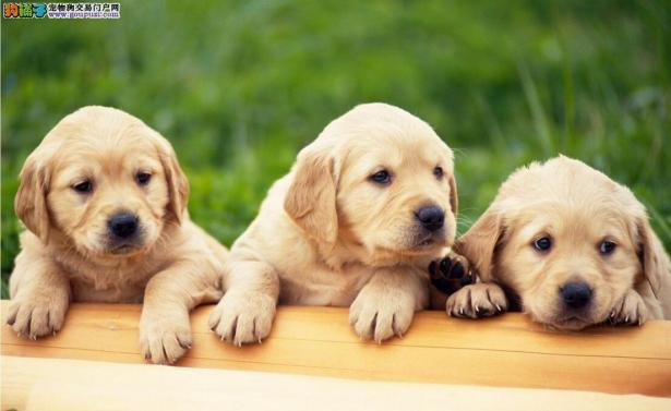 给狗狗做绝育,真的就是残忍吗?5