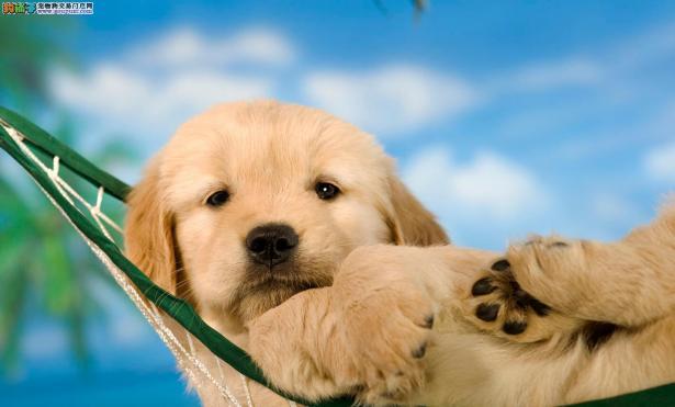 狗狗免疫效果不佳的原因与提升狗狗健康方法5