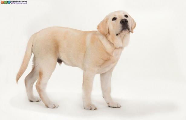 狗狗尿多的原因分析5
