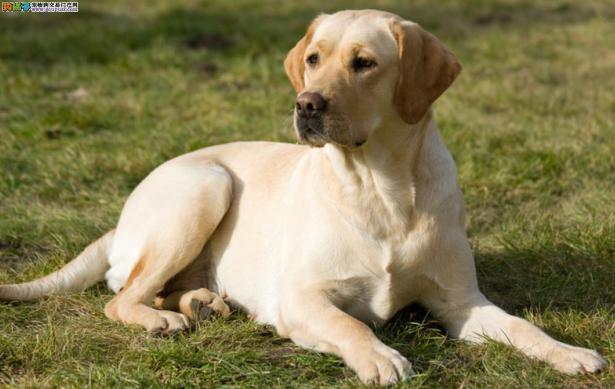 狗狗尿多的原因分析6