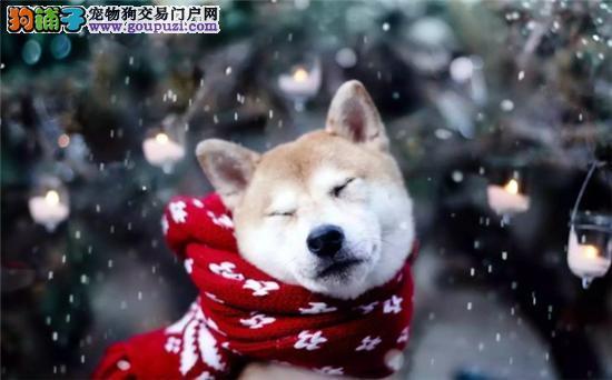 新手必看 冬季养狗须知5