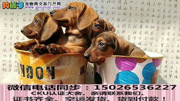纯种腊肠犬 包健康好养.购买签协议.疫苗齐全