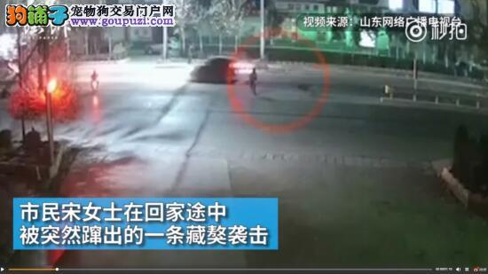 藏獒在路边袭击女路人,再次给养狗人敲响警钟5