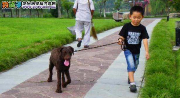 好消息,景区放宽政策,大家可以带着宠物狗游景区了6