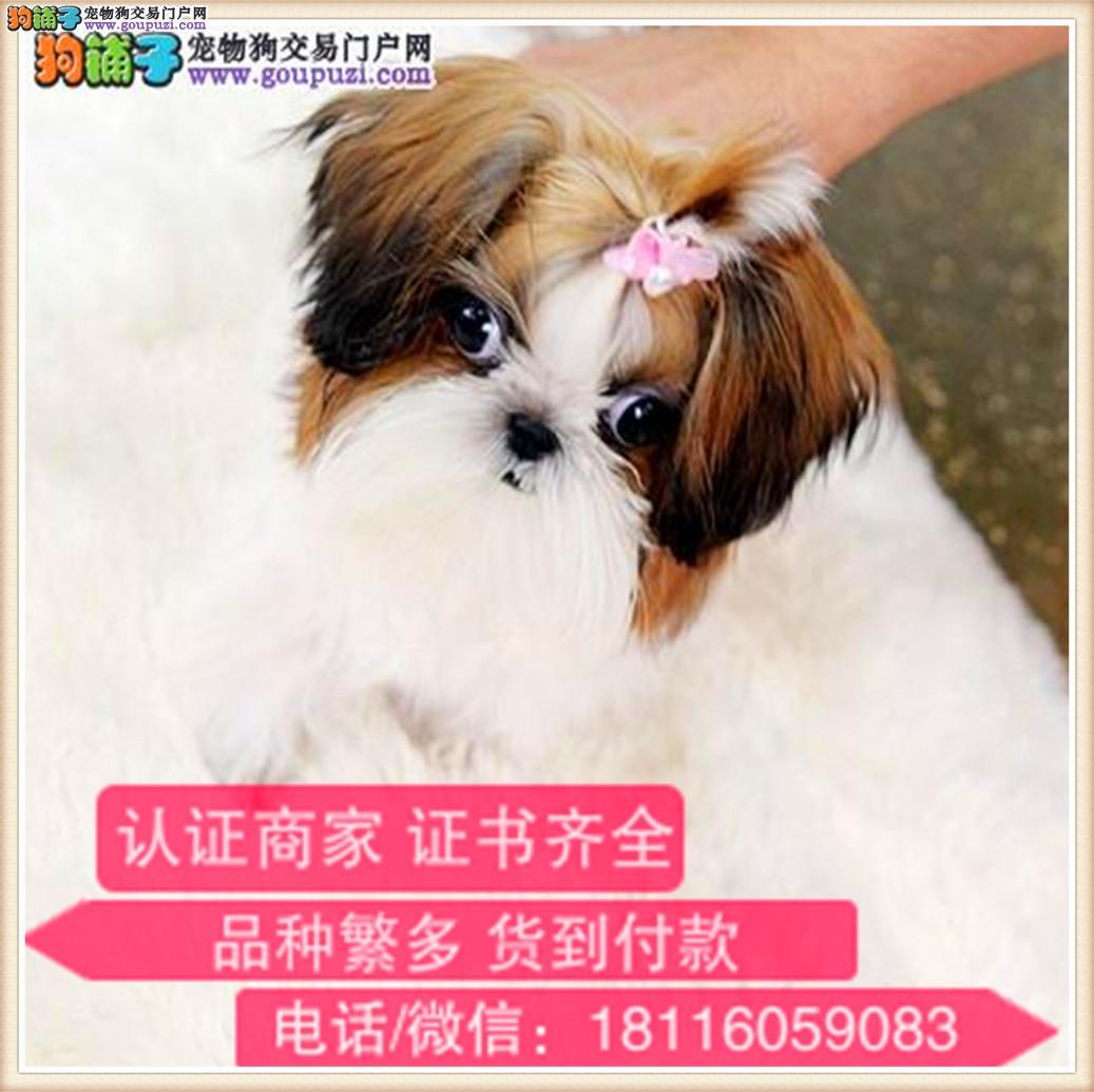 官方保障|出售纯种西施犬 包健康有保障可签购犬协议