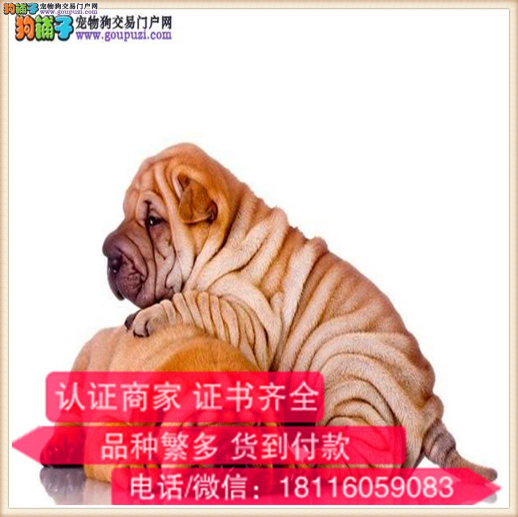 官方保障|出售纯种沙皮狗 包健康有保障可签协议带证书