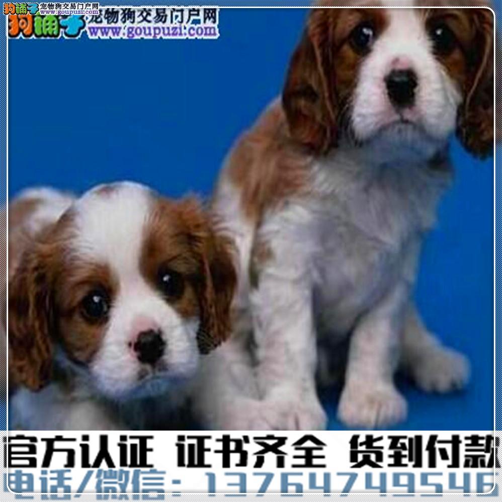 官方保障|犬舍繁殖可卡纯种健康养活可签协议1