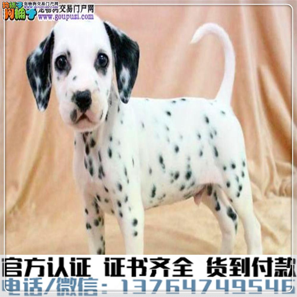 官方保障|犬舍繁殖斑点健康养活可签协议2