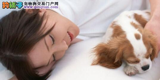 宠物与主人一同入眠是否可行5