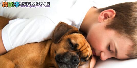 宠物与主人一同入眠是否可行6