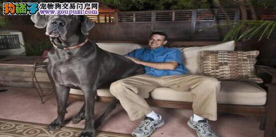 四大破纪录的狗狗,让人惊讶万分5