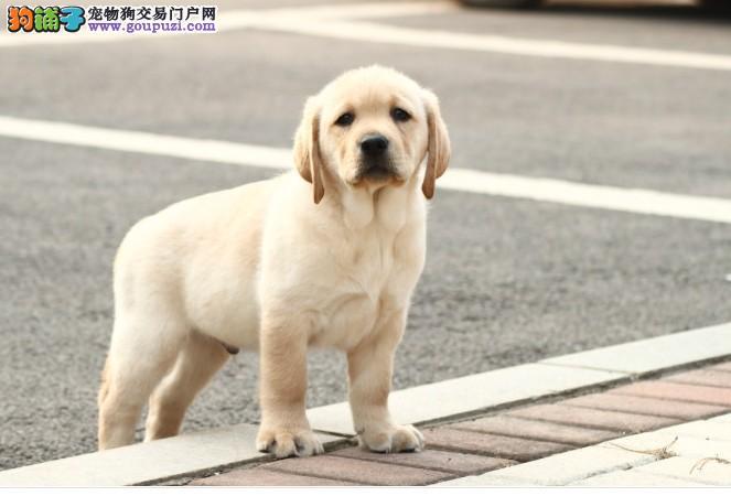 成都17年犬舍直销、多品种、出售世界各类名犬、可自提