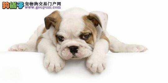 产后狗狗的饮食必须要注意6