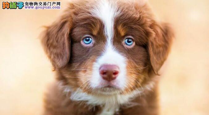 给狗狗洗澡的时候有哪些地要特别留意的5