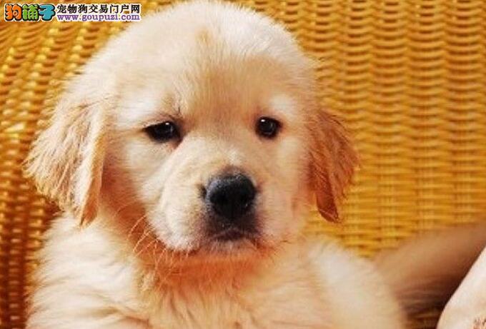 夏天爱狗发生腹泻的处理方法有哪些5
