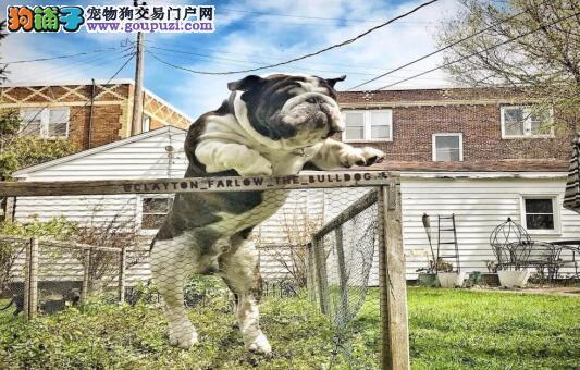 有一种狗,是你心目中那只别人家的狗6