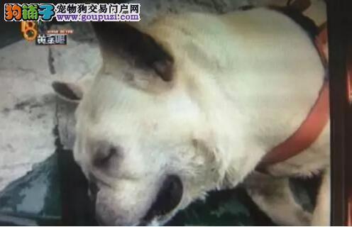 谁对一只价值6万元以上的狗的死亡负责?6