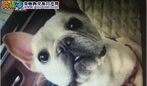 谁对一只价值6万元以上的狗的死亡负责?5