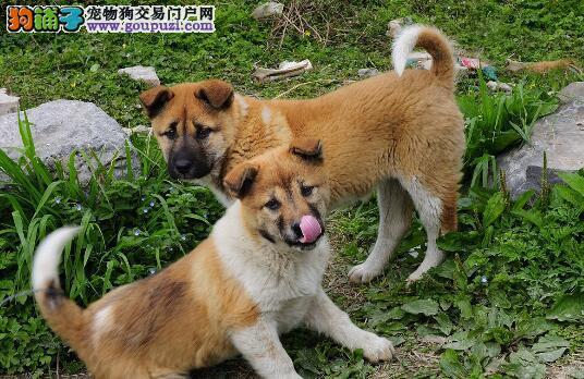 以下几个妙招教你选择好的宠物狗5