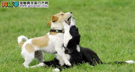 以下几个妙招教你选择好的宠物狗6