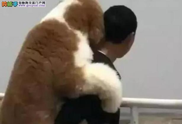爸爸背着贵宾犬,一边走一边说话,网友听的不停掉泪6