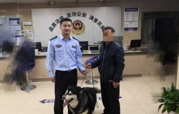 派出所的阿拉斯加犬找到主人了,民警都舍不得它了6