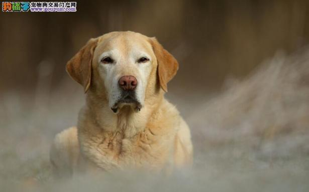 金毛遇上心机主人,用狗粮测试它的智商,还好没被难住6