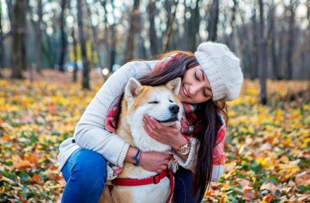 它的笑治愈人心 这么暖的秋田犬你不想养一只吗?6