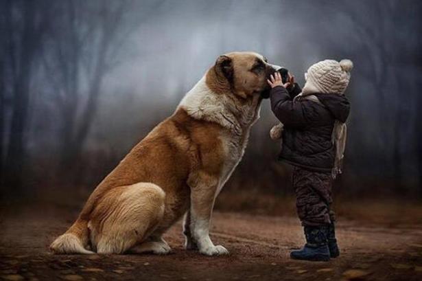 狗狗会成为孩子的美好回忆,看这些照片真实暖爆啦5