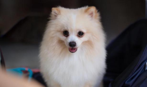 如何让爱犬更可爱呢?这样做给你意想不到的效果5