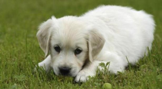 狗狗会哭的四个原因,最后一个宠主一定要注意了6
