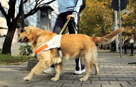 导盲犬是盲人的眼睛,路上碰见了导盲犬该如何做6