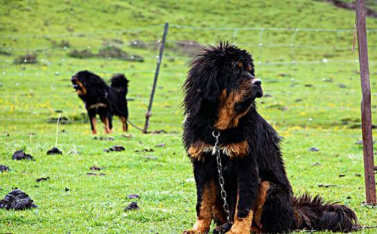 想养阿拉斯加犬的话有什么挑选的技巧呢6