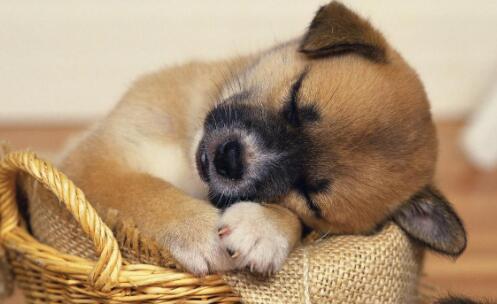 宠物狗是不是有钱人才能养?究竟贵不贵6