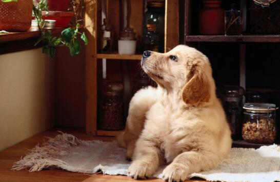 狗狗一直叫怎么办?三种方法让它一秒入睡6