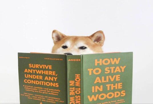 为什么越来越多的人都喜欢养宠物狗狗?6